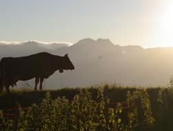 Montagne, agri, traite - CP L. Guillemin