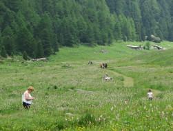 Promenade confort Orgère - OT La Norma VLP (4)